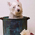 Bath Time Westie by Edward Fielding