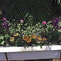 Bath Tub Flowers by Sally Weigand