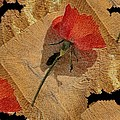 Bats And Roses by Pepita Selles