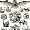 Bats Bats And More Bats by Unknown