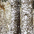 Battered By Winter Blizzard by LeeAnn McLaneGoetz McLaneGoetzStudioLLCcom