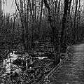 Battle Road Boardwalk by Jeff Heimlich