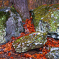 Battlefield In Fall Colors by Paul W Faust -  Impressions of Light