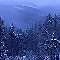 Bavarian Forest In Winter by Ulrich Kunst And Bettina Scheidulin