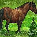 Bay Alberta Stallion by Linda L Martin
