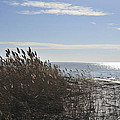 Bay Breeze In Winter by Terry DeLuco