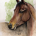 Bay Horse Portrait Watercolor Painting 02 2013 A by Angel Ciesniarska