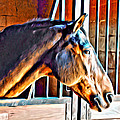 Bay In Stall by Alice Gipson