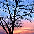 Bay Sunset by Carolyn Derstine