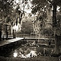 Bayou Evening by Scott Pellegrin