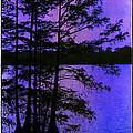 Bayou In Moonlight by Judi Bagwell