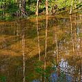 Bayou Reflections by Connie Fox
