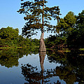 Bayou Reflections by Maggy Marsh