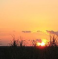 Bayou Sunset by John Glass