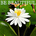 Be Beautiful by David Lee Thompson