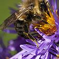 Be My Bee... by Les Lorek