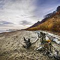 Beach At Scarborough Bluffs by Elena Elisseeva
