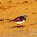 Beach Bird 1 by Anita Lewis