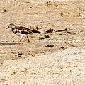 Beach Bird 2 by Anita Lewis
