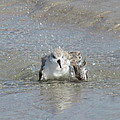 Beach Bird Bath 2 by Ellen Meakin