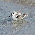 Beach Bird Bath 4 by Ellen Meakin