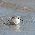 Beach Bird Bath 5 by Ellen Meakin