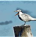 Beach Bird by Jon Berghoff