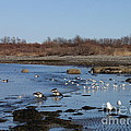 Beach Birds by Robert Nickologianis