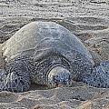 Beach Bum by Douglas Barnard