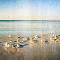 Beach Combers - Seagull Art By Sharon Cummings by Sharon Cummings