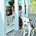 Beach Dog 1 by Jane Schnetlage