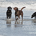 Beach Dogs by Ruth H Curtis