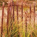 Beach Dune Fence At Cape May Nj by Eric  Schiabor