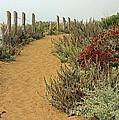 Beach Dune  by Kate Brown