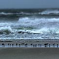 Beach Feast - Outer Banks Ocracoke by Dan Carmichael