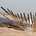 Beach Fencing by Michelle Powell