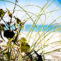 Beach Flower by Christina Kozlowski