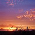 Beach Grass At Gearhart by Scott Carda