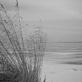 Beach Grass In The Snow by Ralf Kaiser