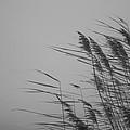 Beach Grass by Ralf Kaiser