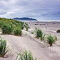 Beach Grass by Robert Bales