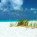 Beach Grass by Robyn Saunders
