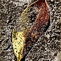 Beach Leaf by Geraldine Alexander