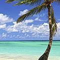 Beach Of A Tropical Island by Elena Elisseeva