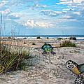 Beach Pals by Betsy Knapp