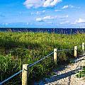 Beach Path by Dulce Levitz