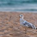 Beach Patrol by Sebastian Musial