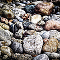Pebbles On Beach by Elena Elisseeva
