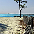 Beach Pine by Skip Willits