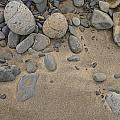 Beach Rocks by David Stone
